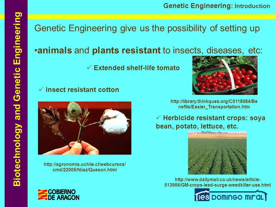 Genetic Engineering give us the possibility of setting up