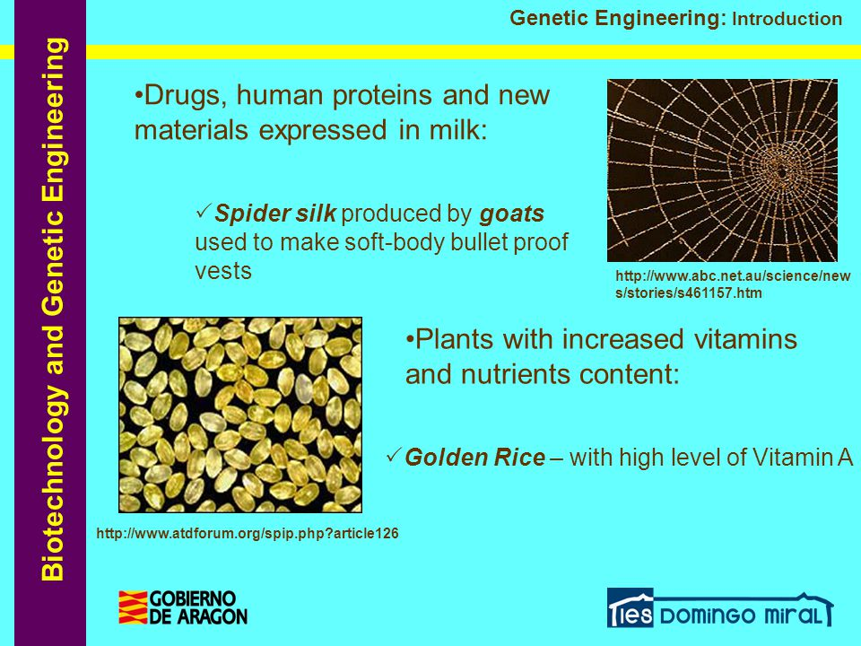 Drugs, human proteins and new materials expressed in milk: