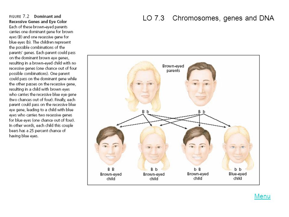 LO 7.3 Chromosomes, genes and DNA