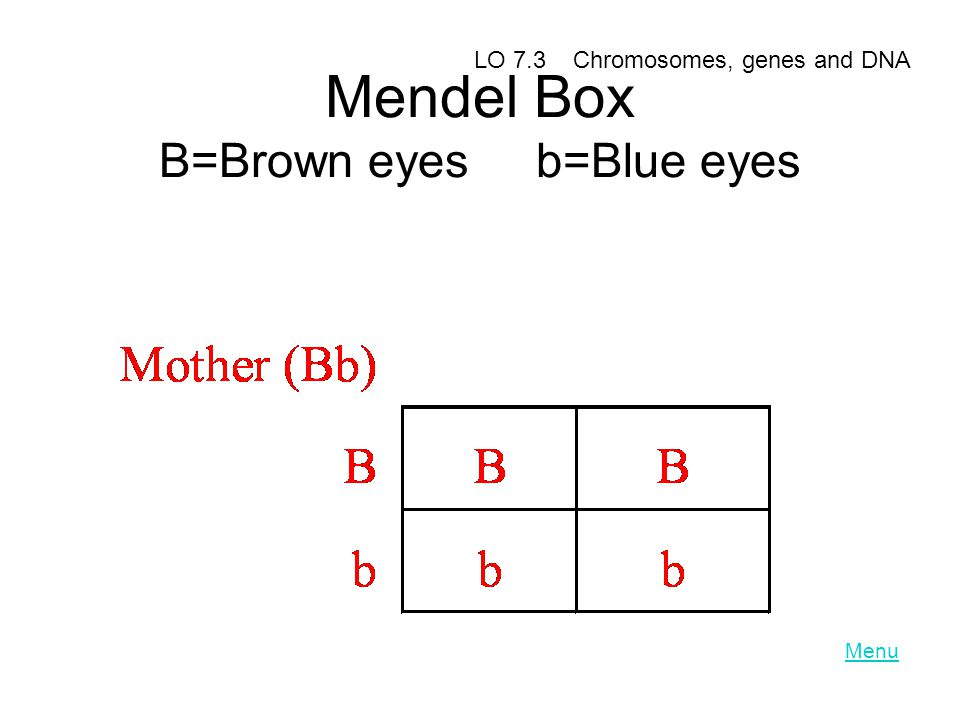 Mendel Box B=Brown eyes b=Blue eyes