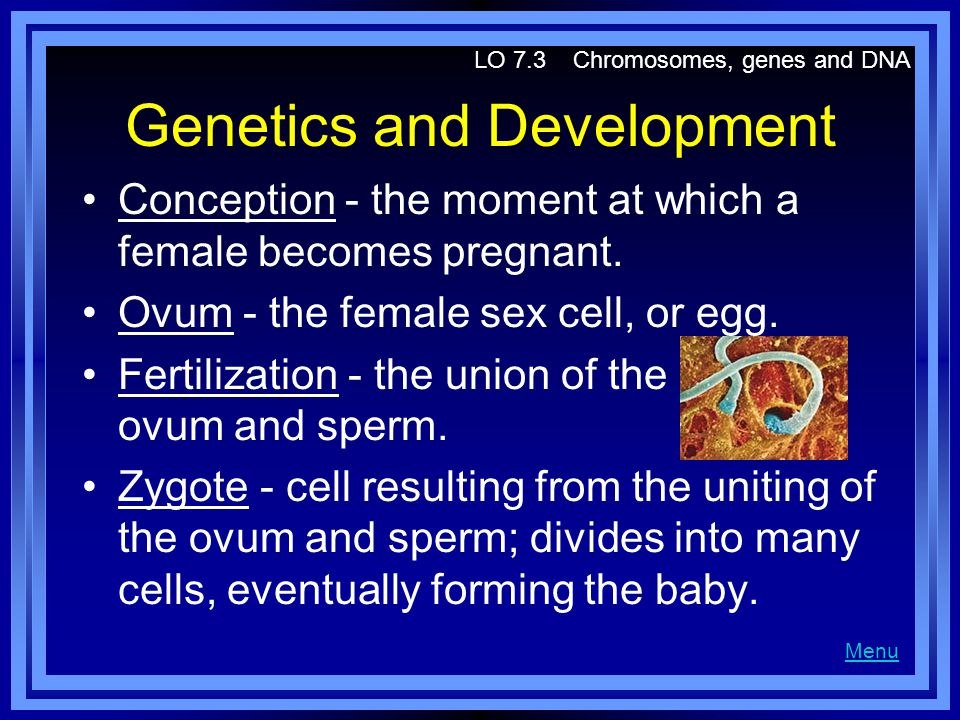 Genetics and Development