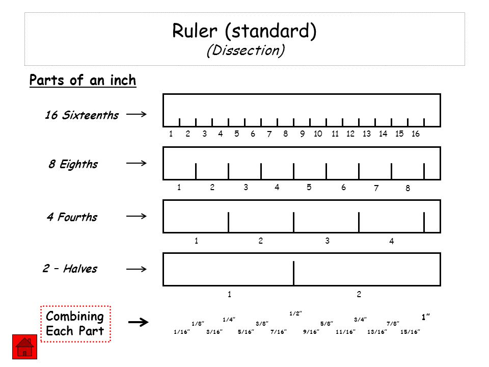 Ruler (standard) (Dissection)