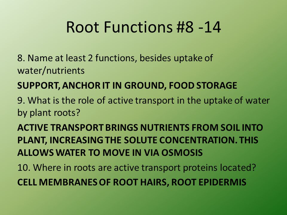 Root Functions #8 -14