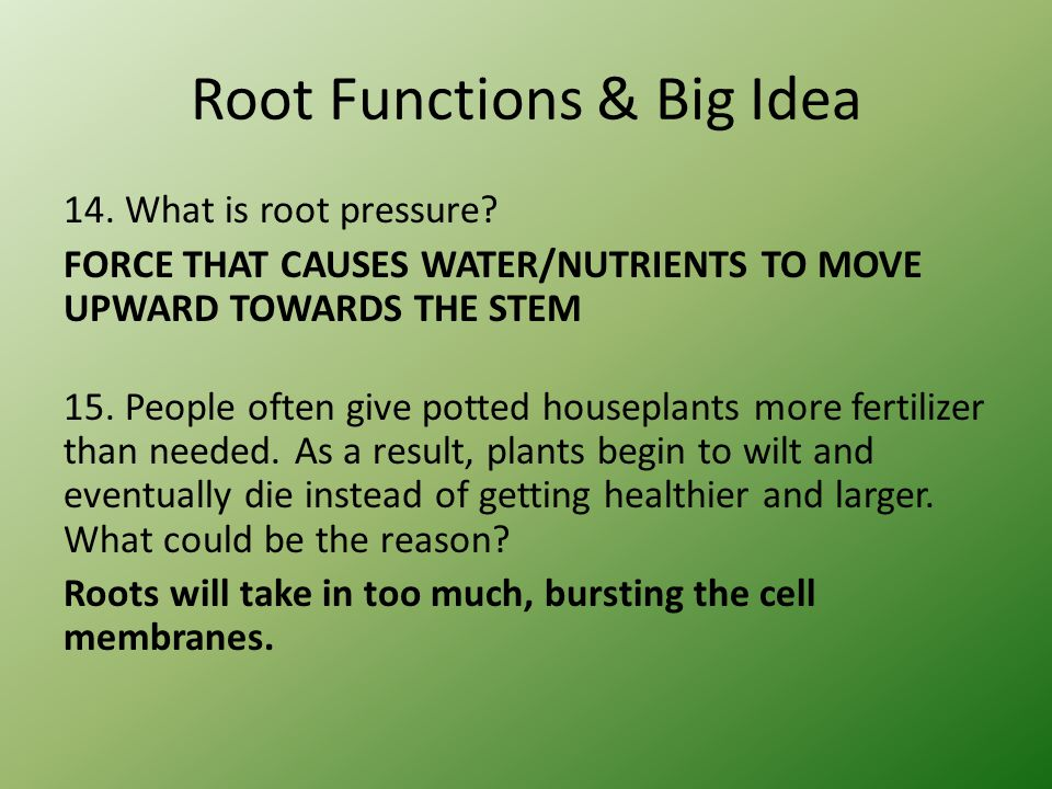 Root Functions & Big Idea