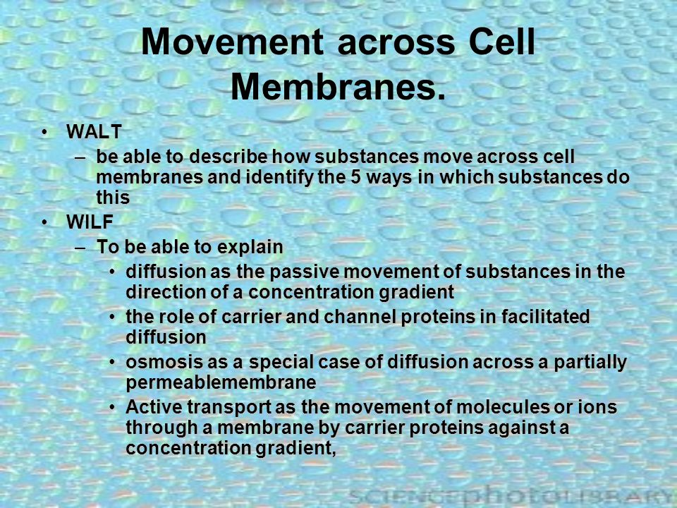 Movement across Cell Membranes.