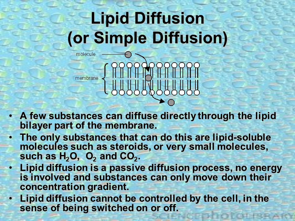Lipid Diffusion (or Simple Diffusion)