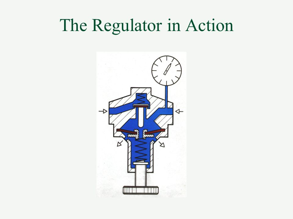 The Regulator in Action