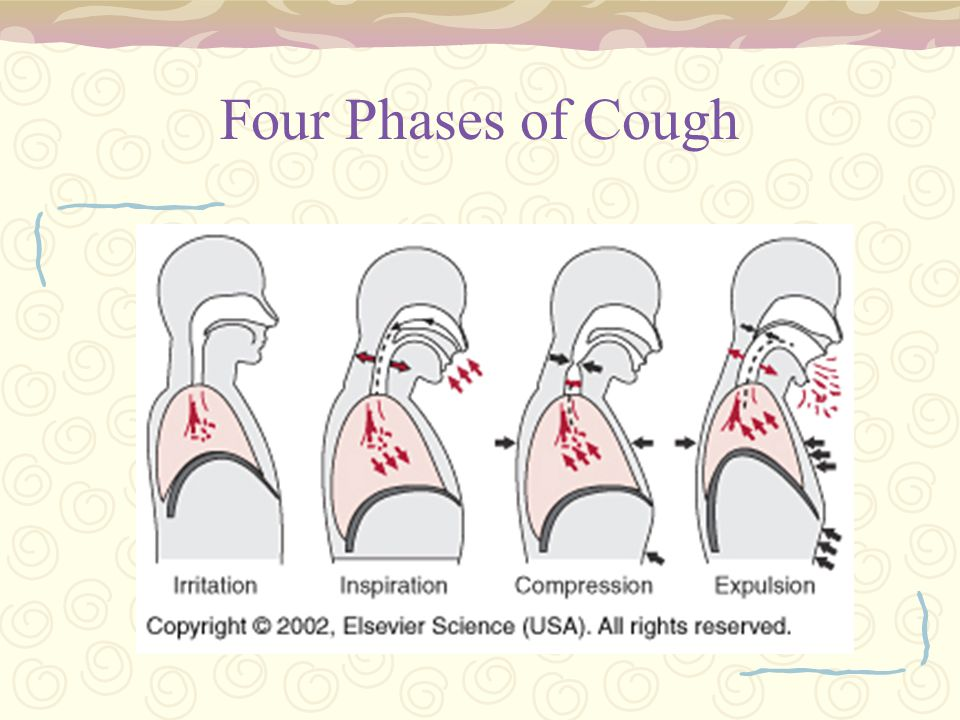 Four Phases of Cough