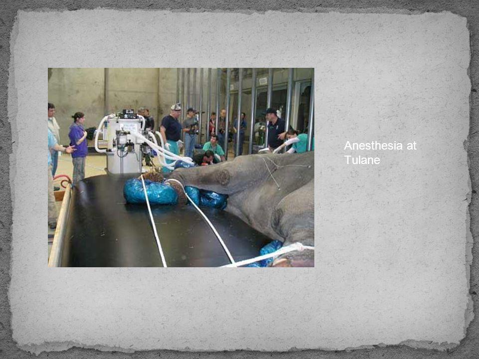 Anesthesia at Tulane