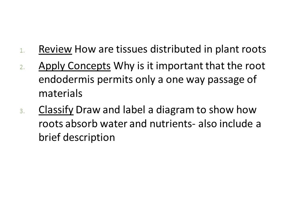 Review How are tissues distributed in plant roots