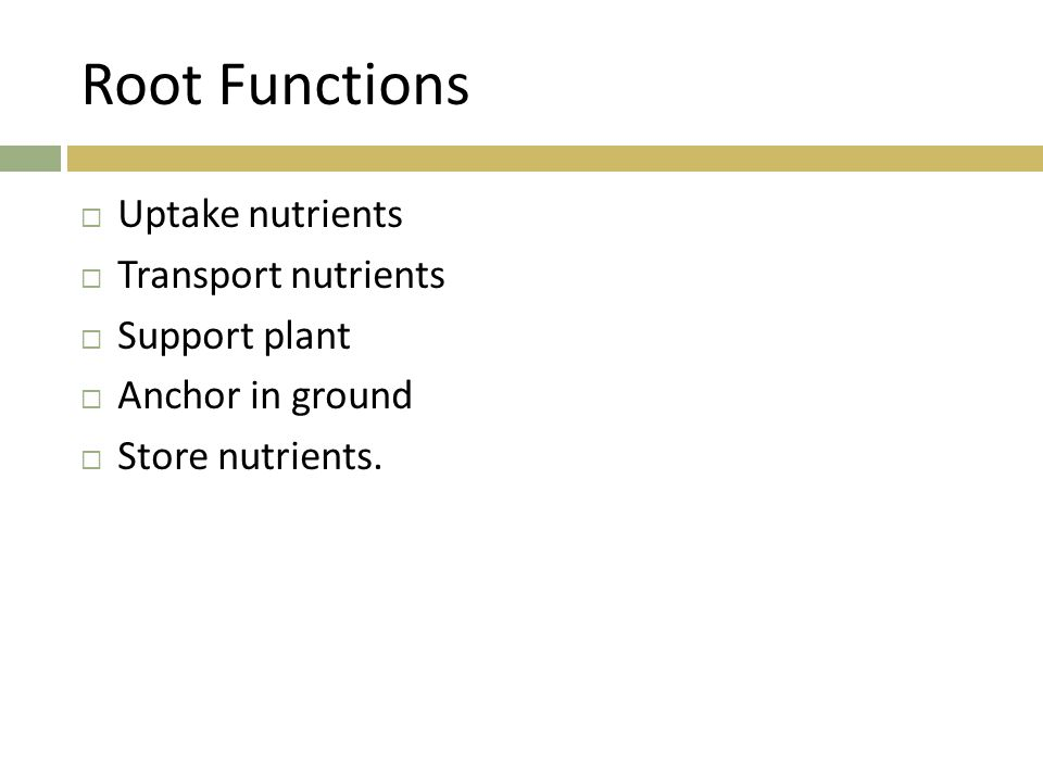 Root Functions Uptake nutrients Transport nutrients Support plant