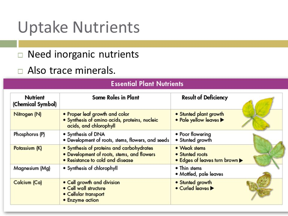 Uptake Nutrients Need inorganic nutrients Also trace minerals.