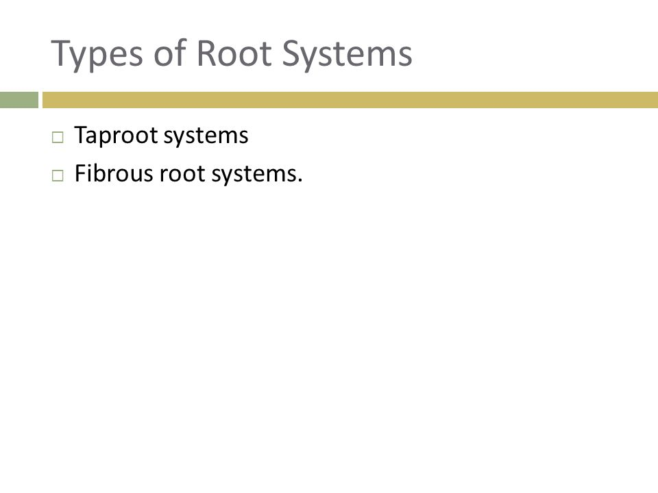 Types of Root Systems Taproot systems Fibrous root systems.