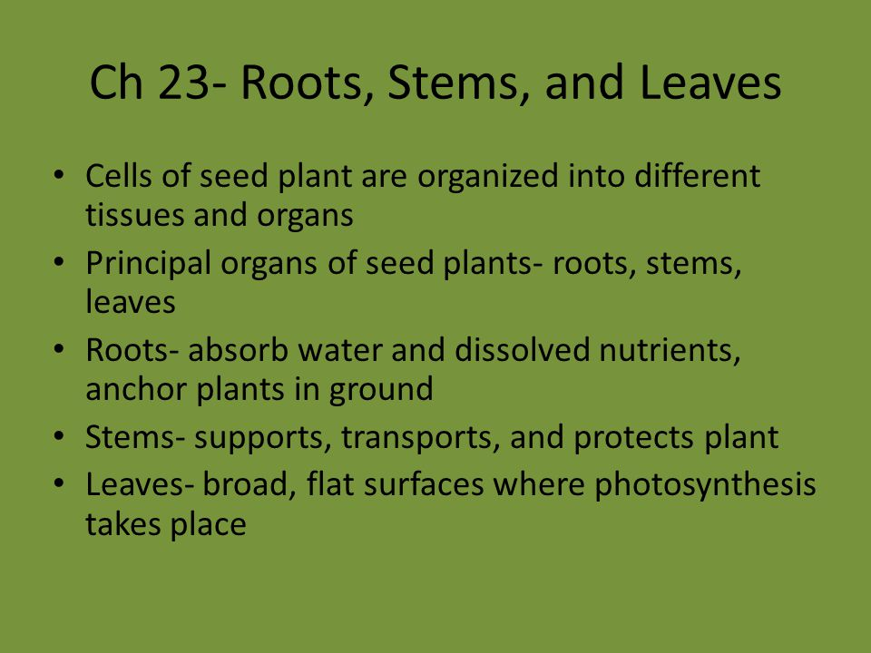 Ch 23- Roots, Stems, and Leaves