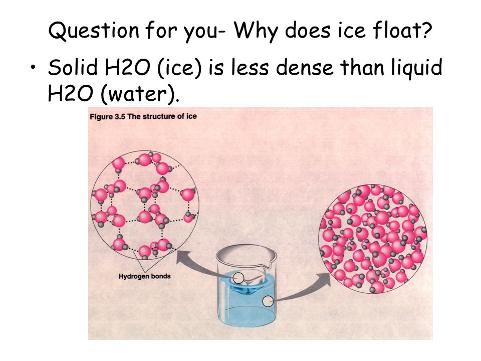 Question for you- Why does ice float