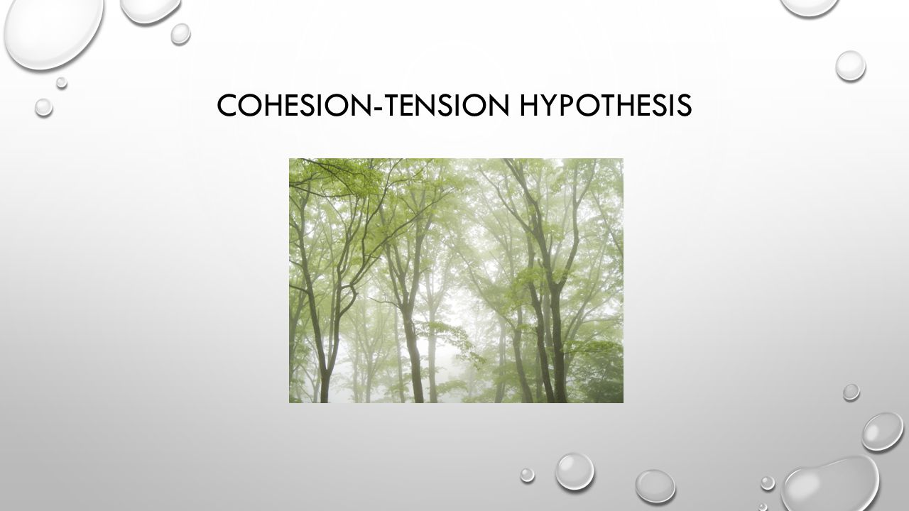 Cohesion-Tension Hypothesis
