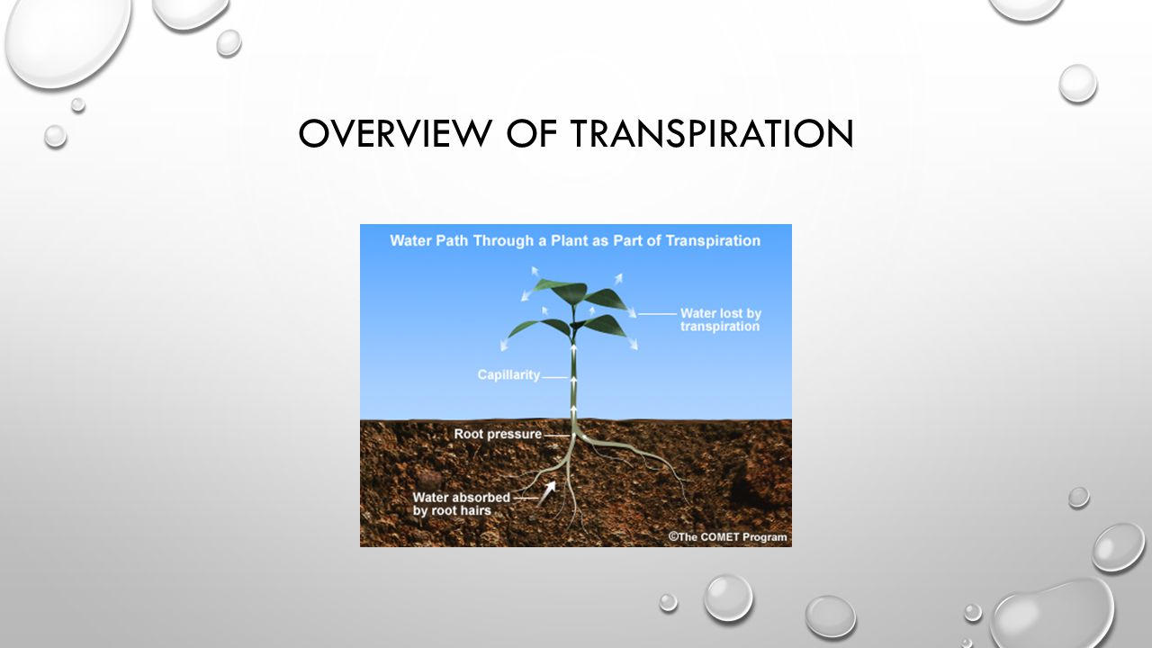 Overview of Transpiration