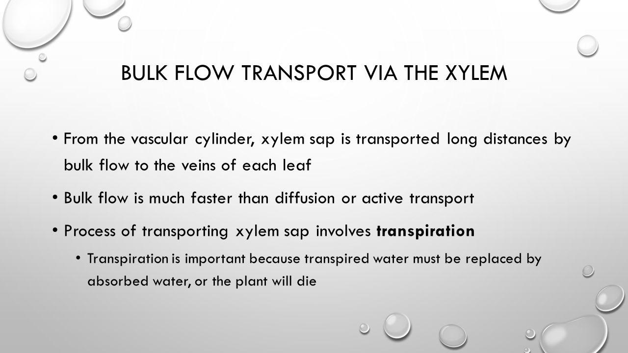 Bulk Flow Transport via the Xylem