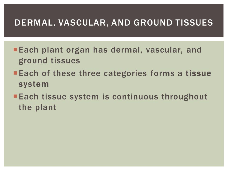 Dermal, Vascular, and Ground Tissues