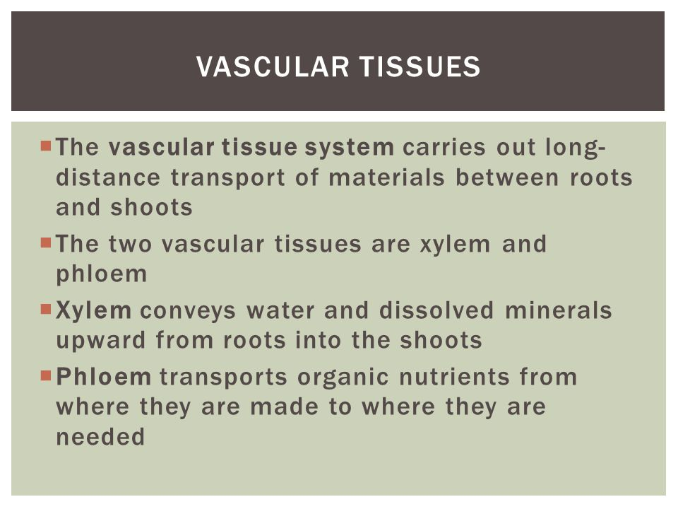 Vascular tissues The vascular tissue system carries out long-distance transport of materials between roots and shoots.