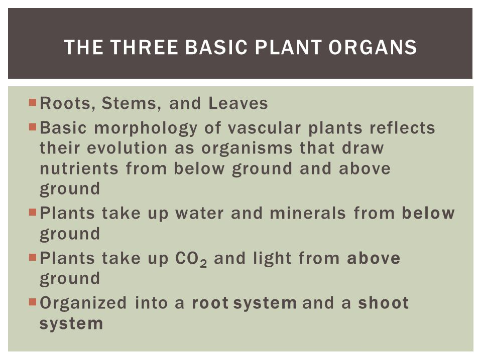 The Three Basic Plant Organs