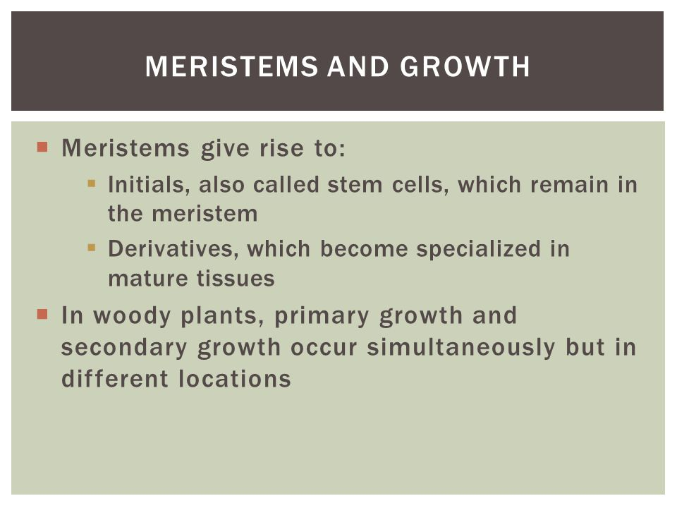 Meristems and Growth Meristems give rise to: