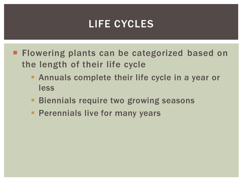 Life cycles Flowering plants can be categorized based on the length of their life cycle. Annuals complete their life cycle in a year or less.