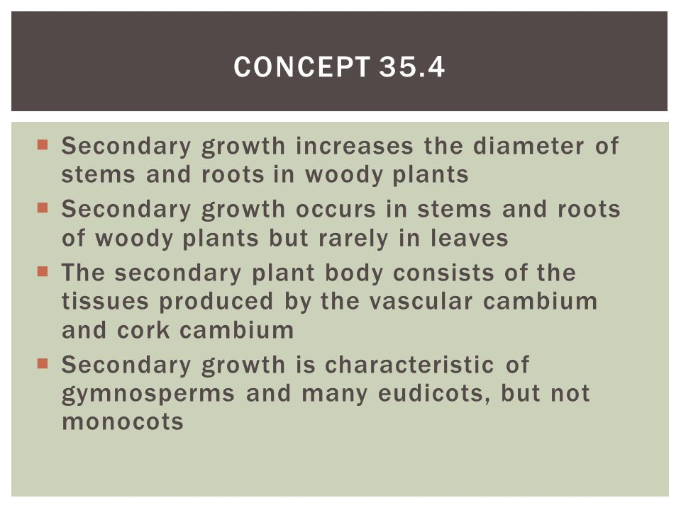 Concept 35.4 Secondary growth increases the diameter of stems and roots in woody plants.