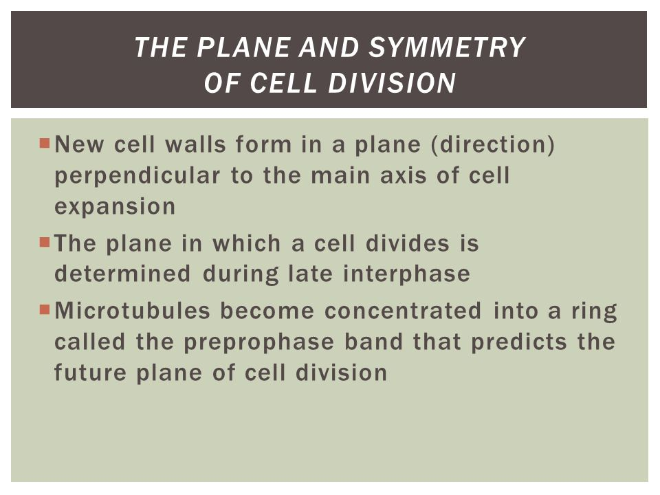 The Plane and Symmetry of Cell Division