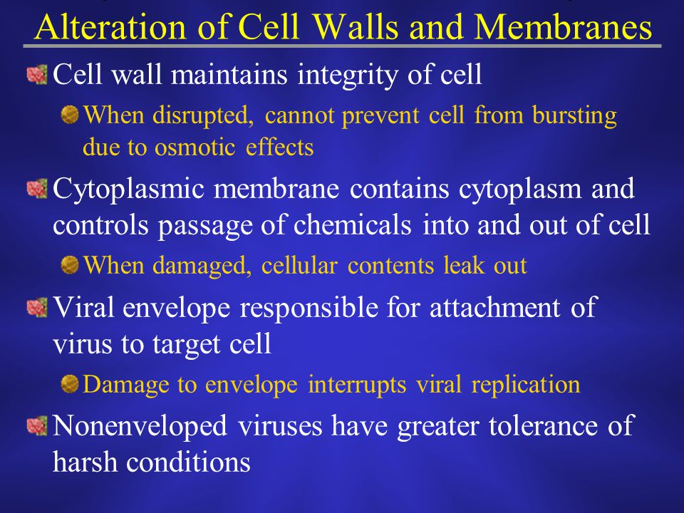 Alteration of Cell Walls and Membranes