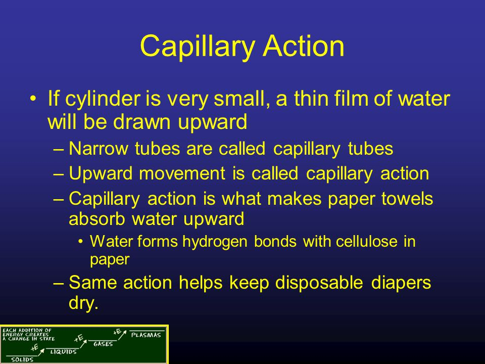 Capillary Action If cylinder is very small, a thin film of water will be drawn upward. Narrow tubes are called capillary tubes.