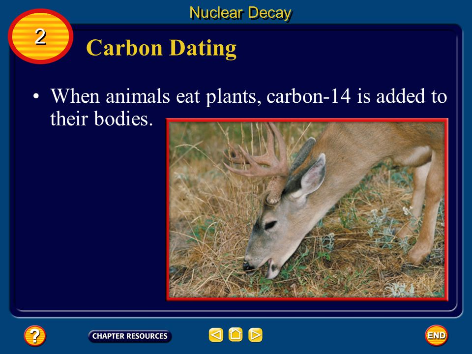 Nuclear Decay 2 Carbon Dating When animals eat plants, carbon-14 is added to their bodies.