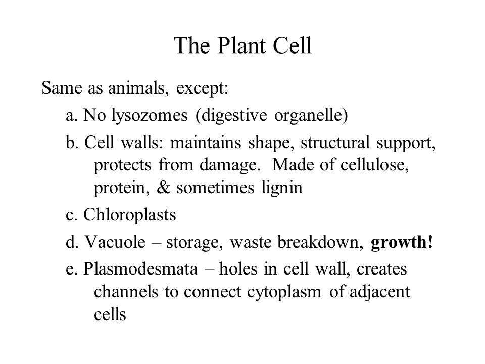 The Plant Cell Same as animals, except: