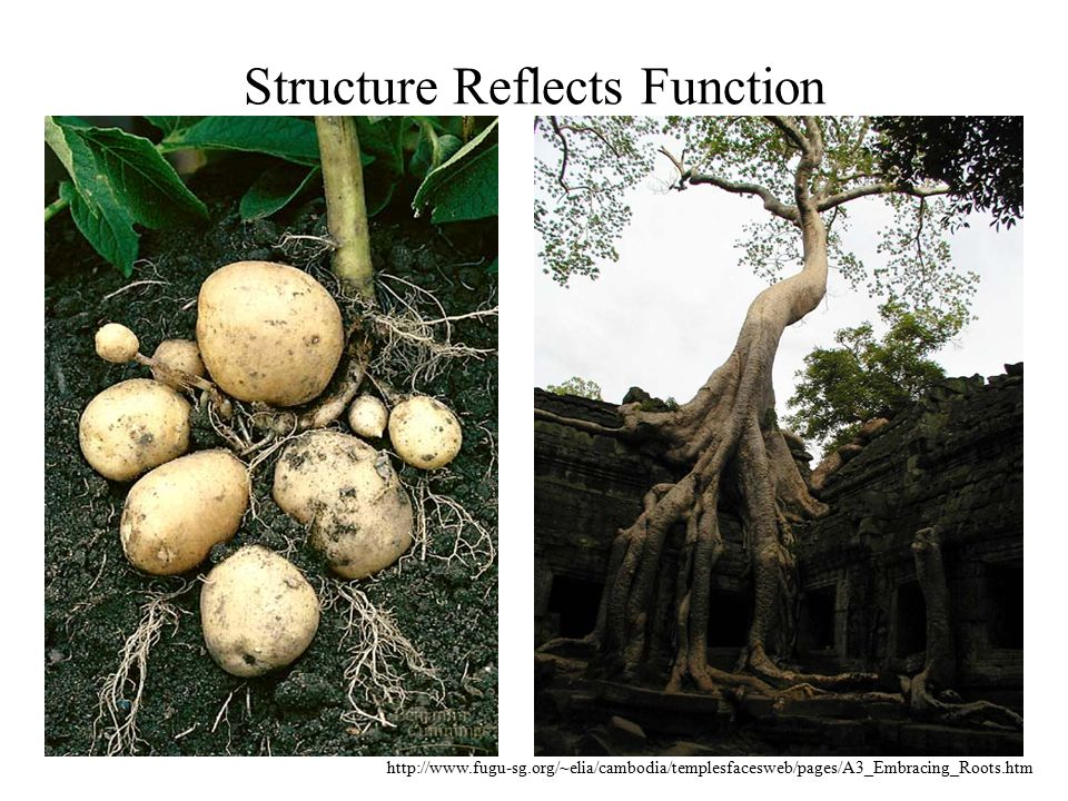 Structure Reflects Function