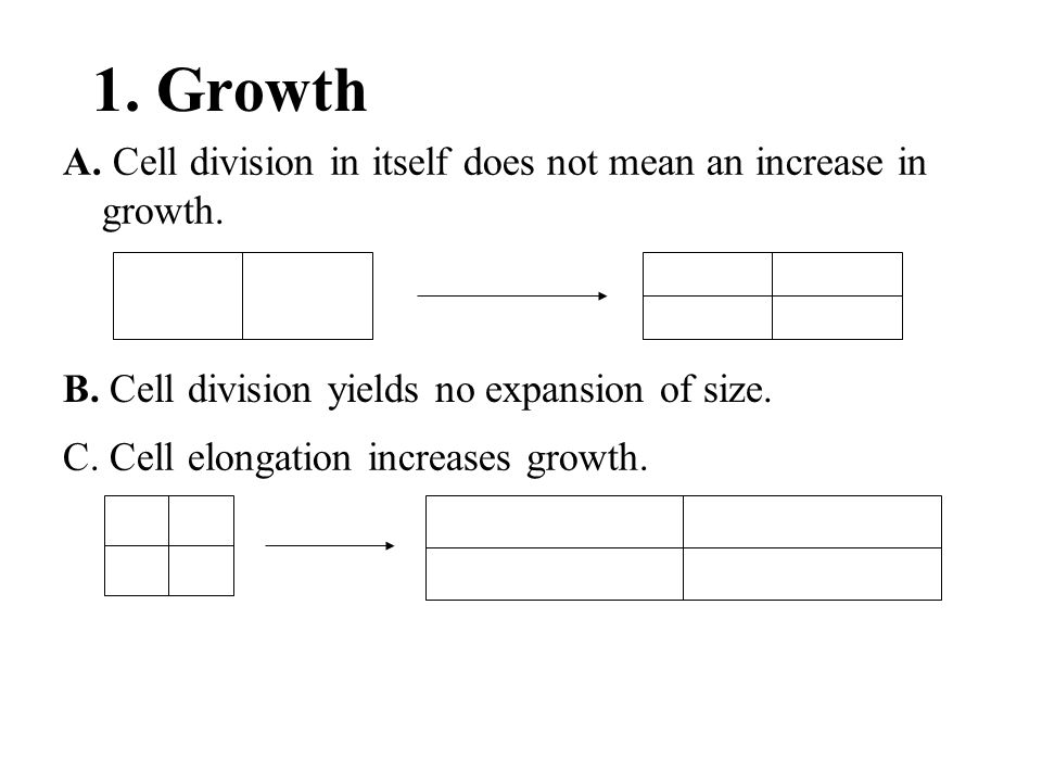1. Growth A. Cell division in itself does not mean an increase in growth. B. Cell division yields no expansion of size.