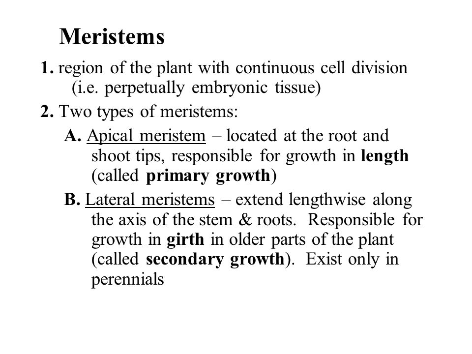 Meristems 1. region of the plant with continuous cell division (i.e. perpetually embryonic tissue) 2. Two types of meristems: