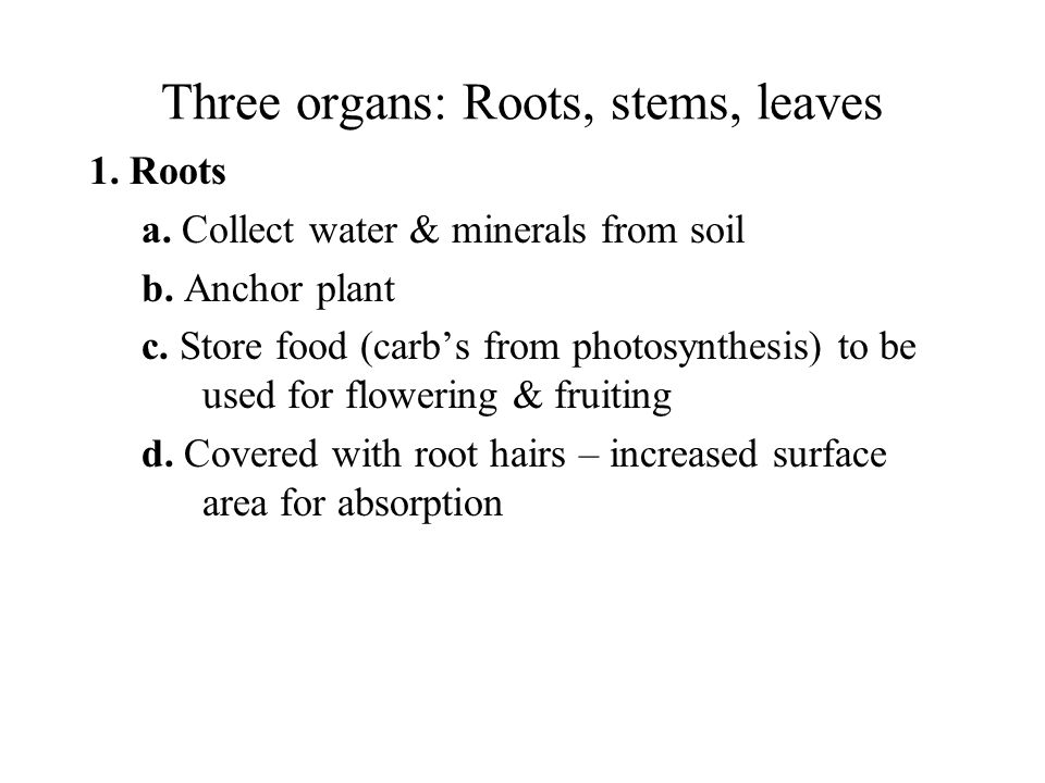 Three organs: Roots, stems, leaves