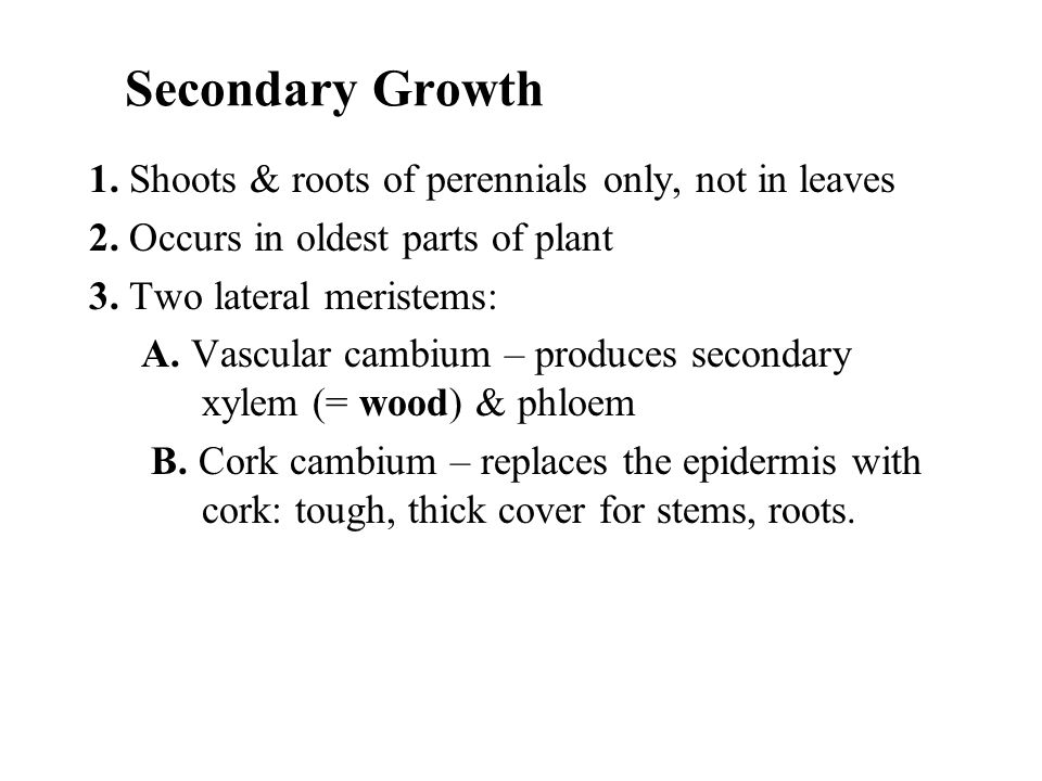 Secondary Growth 1. Shoots & roots of perennials only, not in leaves