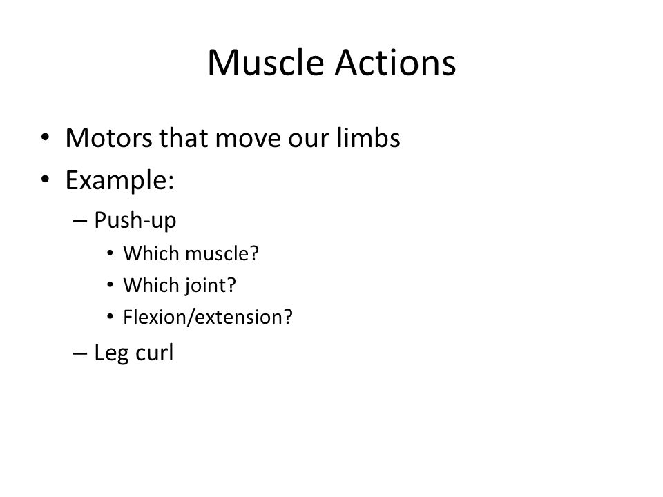 Muscle Actions Motors that move our limbs Example: Push-up Leg curl