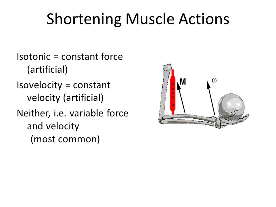 Shortening Muscle Actions