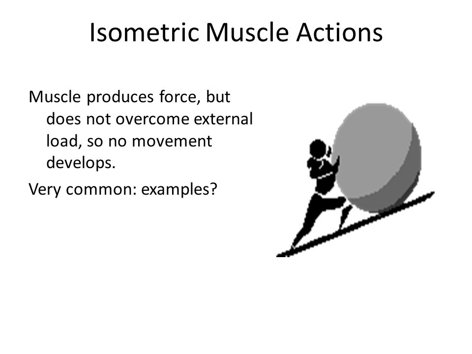 Isometric Muscle Actions