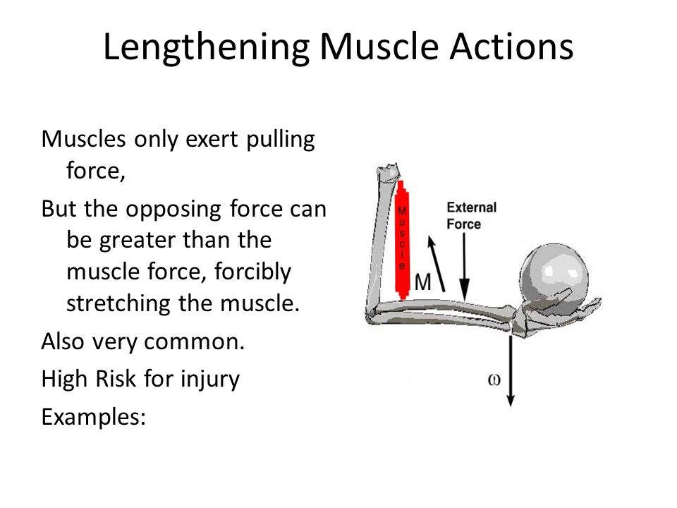 Lengthening Muscle Actions