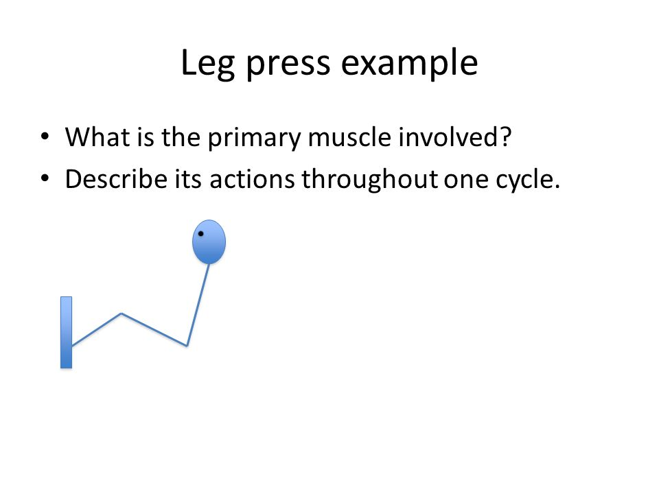 Leg press example What is the primary muscle involved