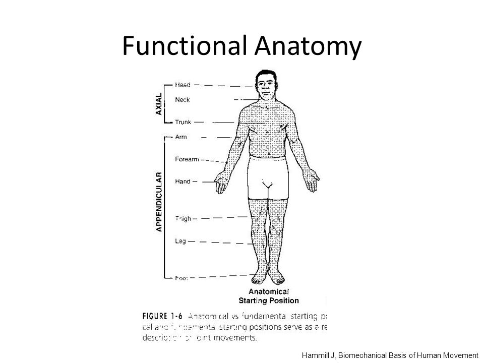 Functional Anatomy Hammill J, Biomechanical Basis of Human Movement