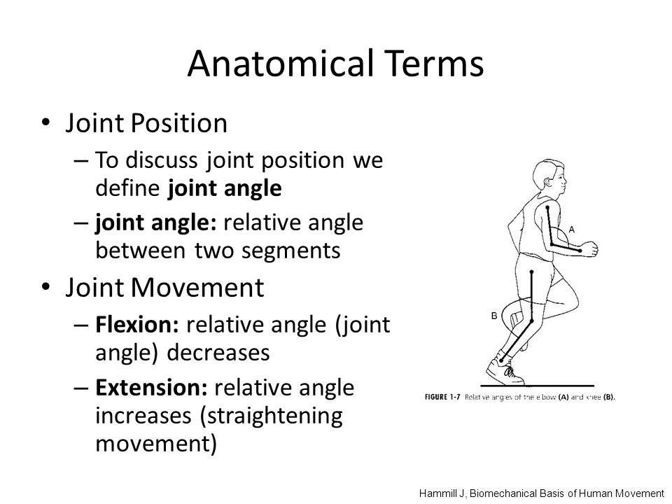 Anatomical Terms Joint Position Joint Movement