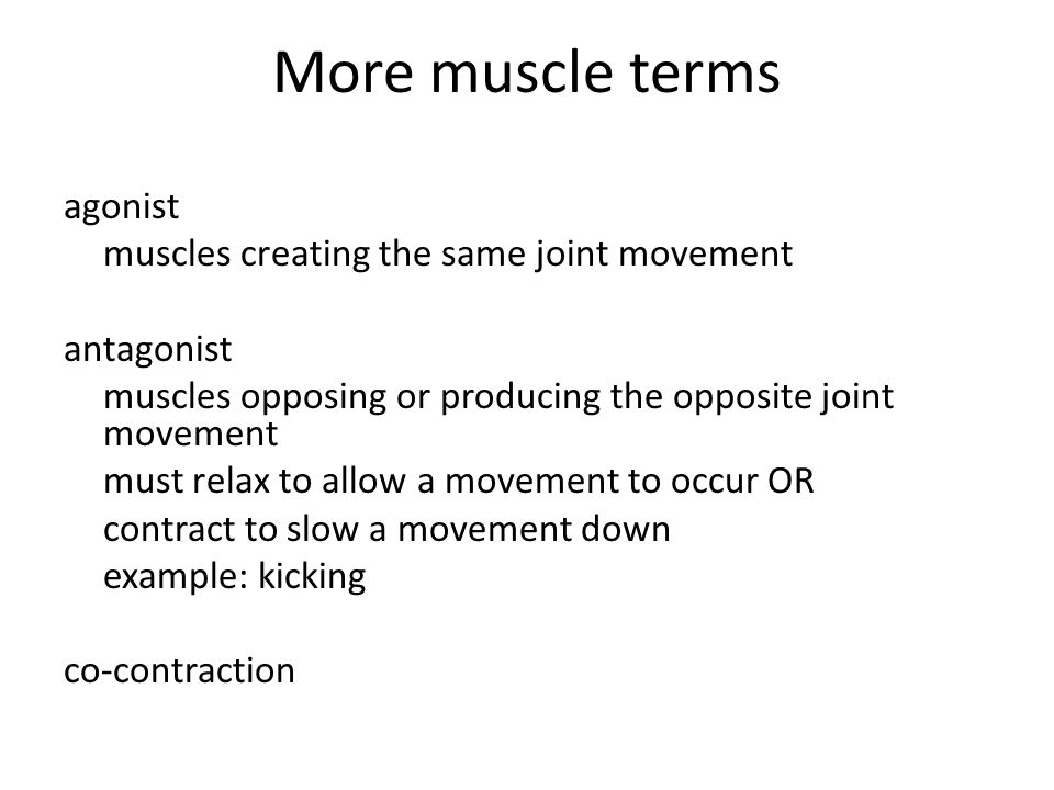 More muscle terms agonist muscles creating the same joint movement