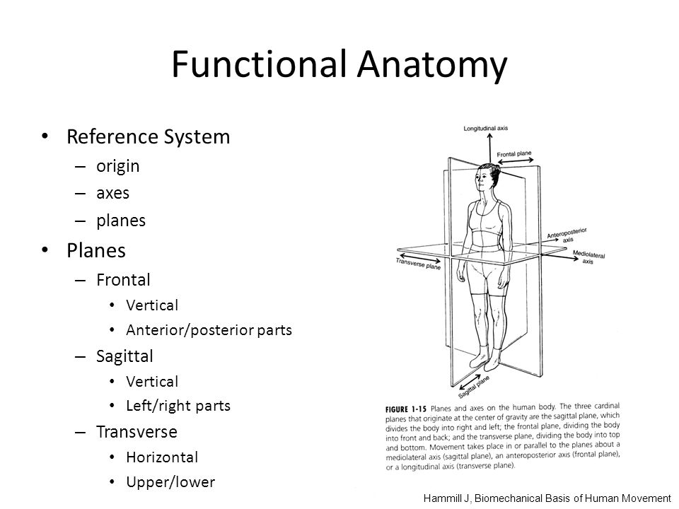 Functional Anatomy Reference System Planes origin axes planes Frontal