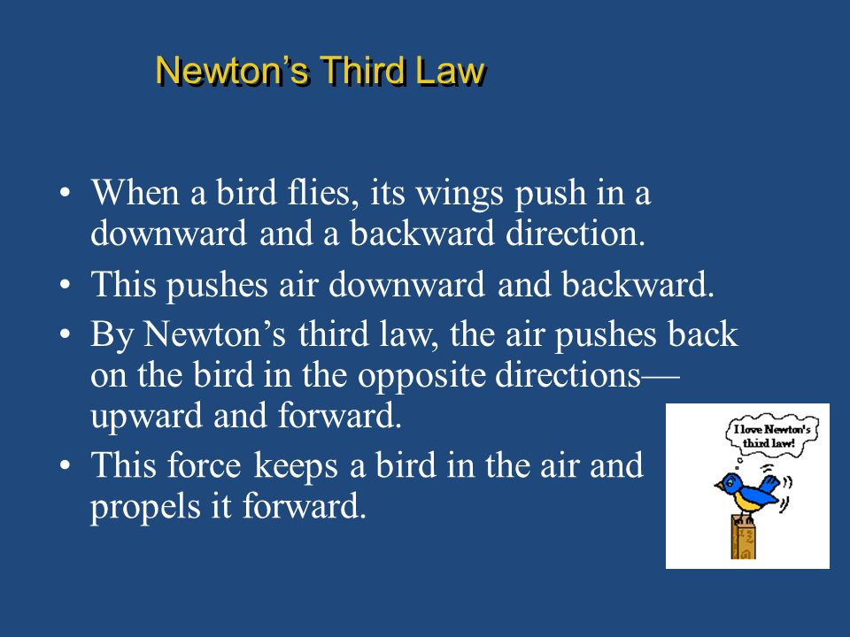 Newton's Third Law When a bird flies, its wings push in a downward and a backward direction. This pushes air downward and backward.