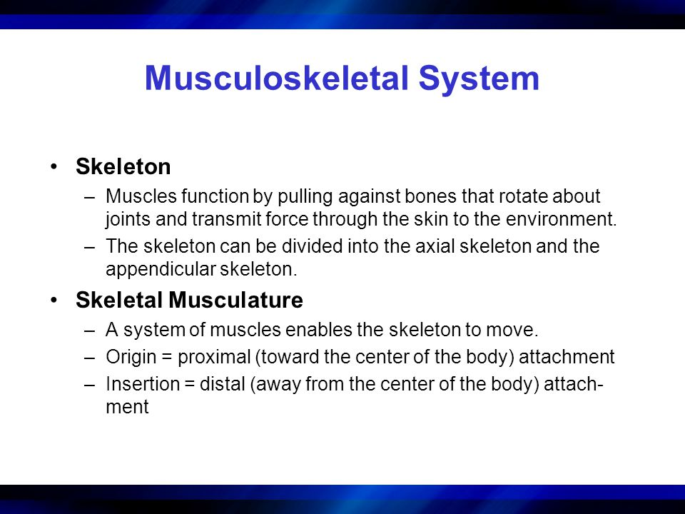 Musculoskeletal System