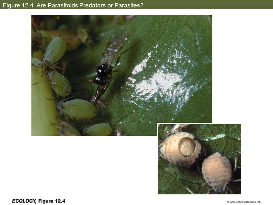 Figure 12.4 Are Parasitoids Predators or Parasites